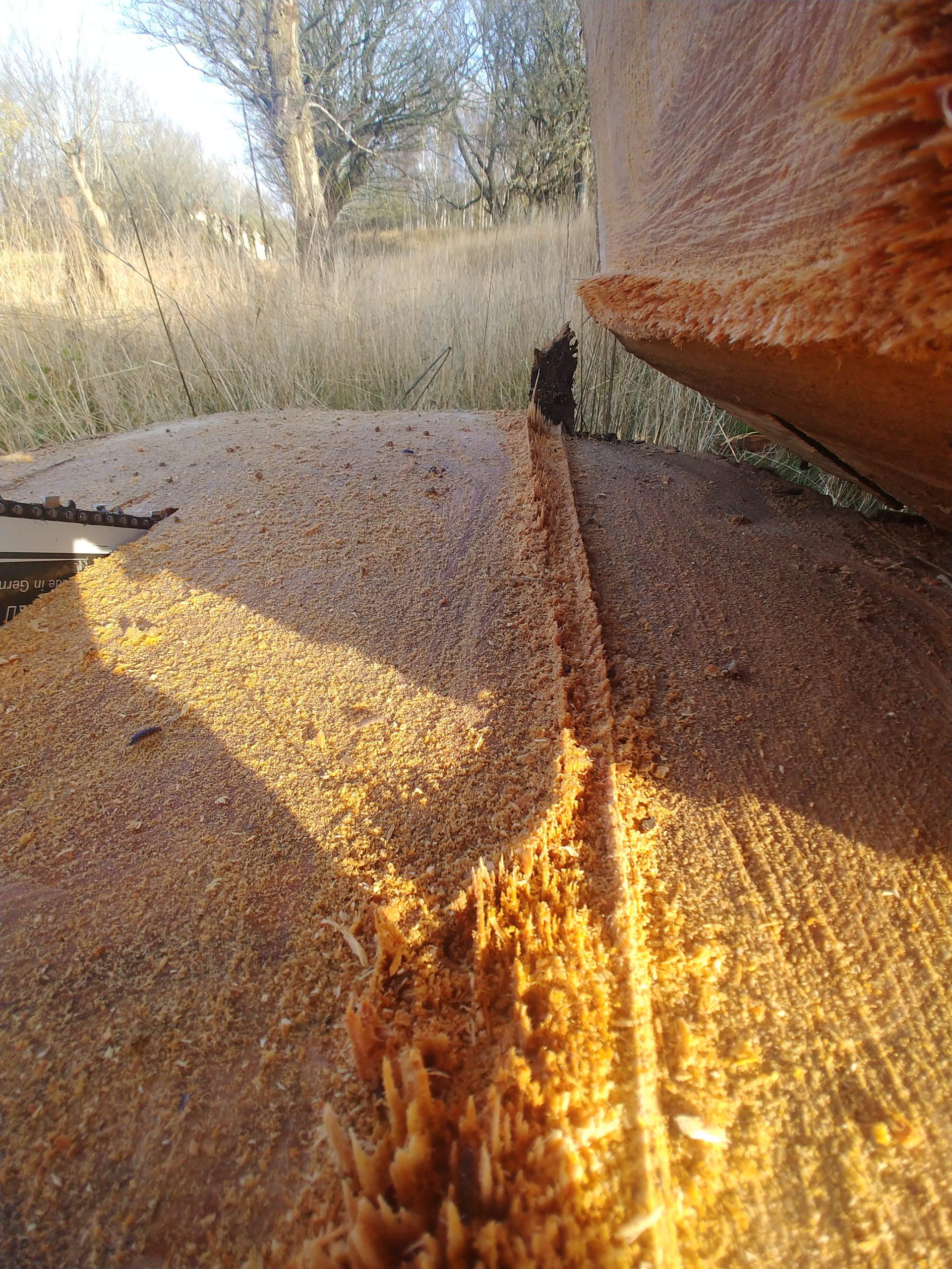 Kalmar Trädfällning hjälper dig fälla träd
