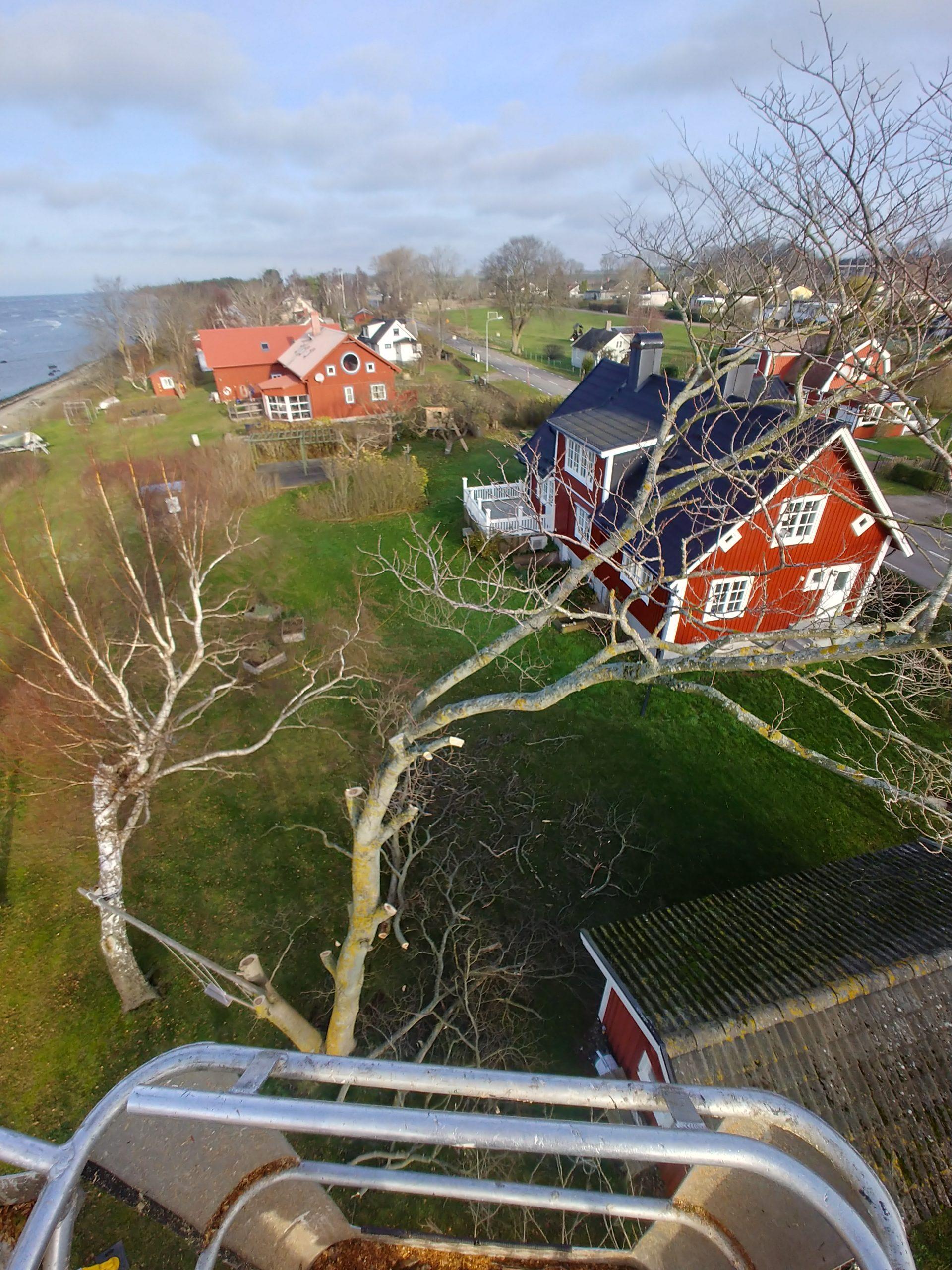 Trädfällning från skylift på Öland Kalmar