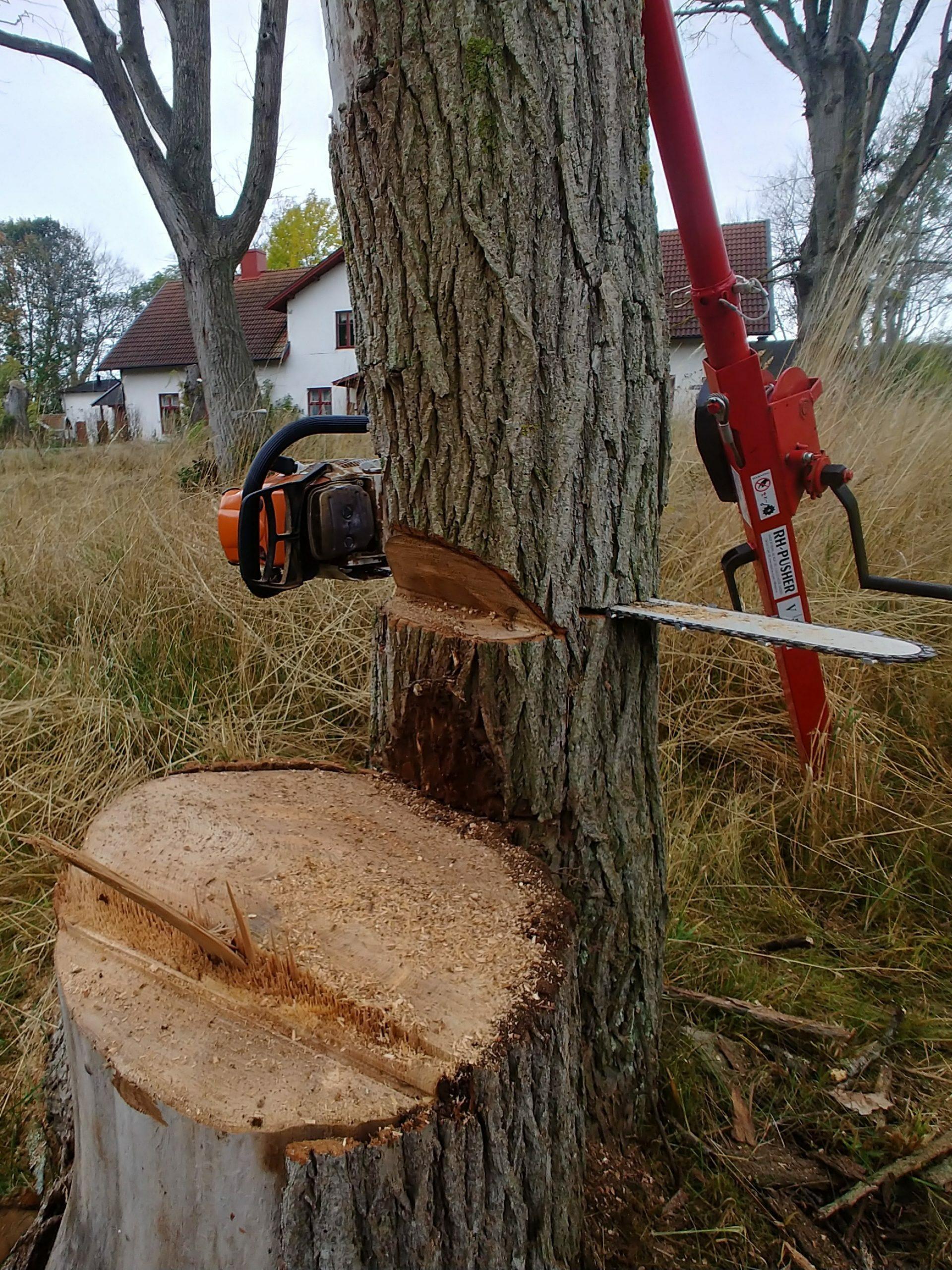Trädfällning på Öland Kalmar