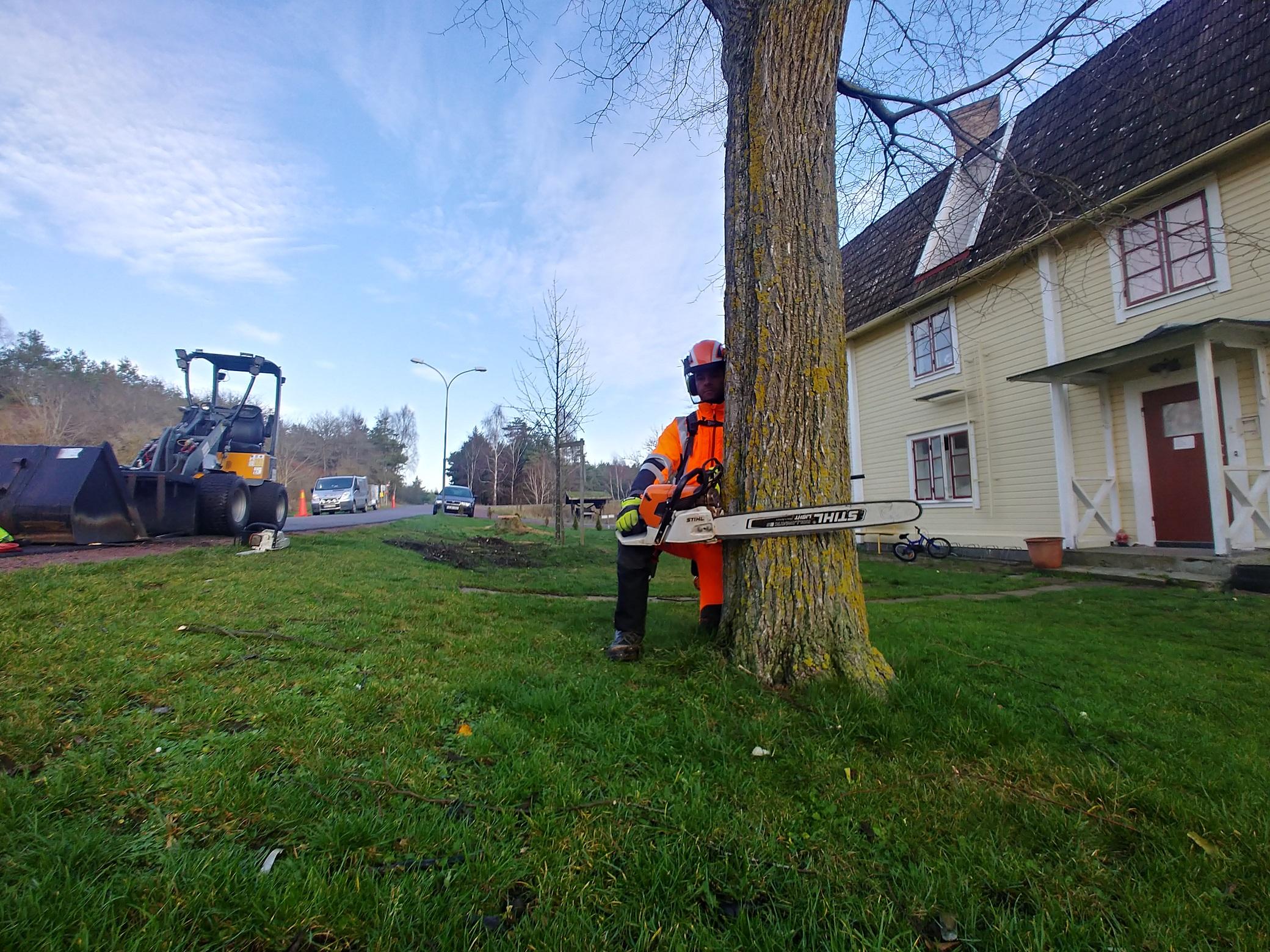 Kalmar Trädfällning - Trädfällning i Kalmar