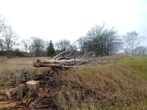 Trädfällning Kalmar