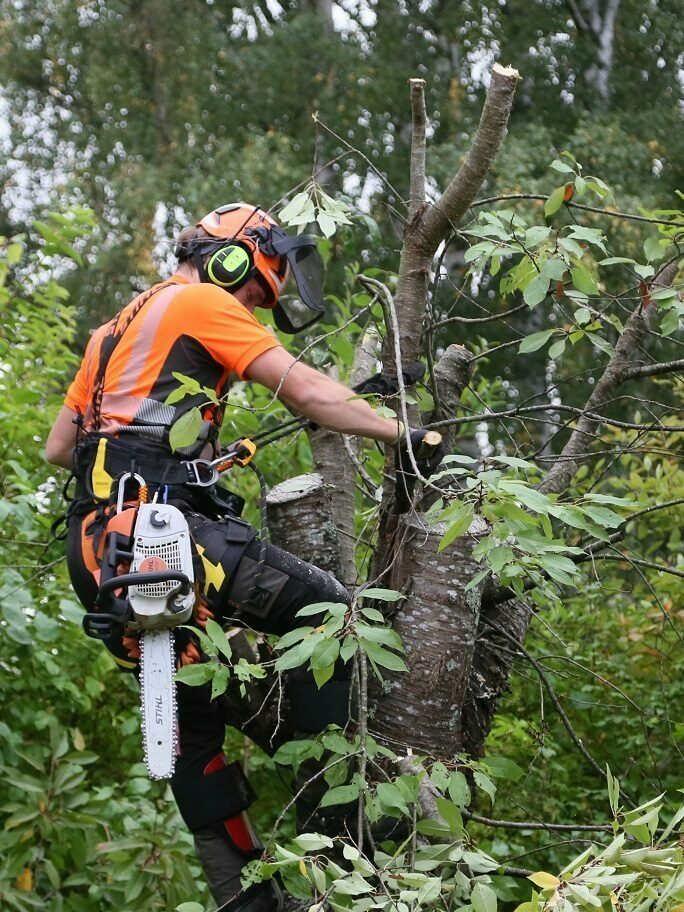 Trädfällning Kalmar Arborist
